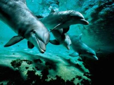 flip-nicklin-bottlenose-dolphins-hawaii-53323