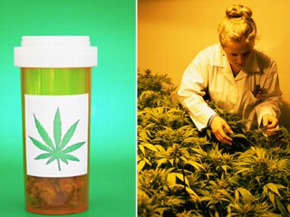 legaliza of medical marijuana Ricky williams announces plan to launch a medical marijuana brand this state could be the first to legalize cannabis for pets vermont just legalized weed.