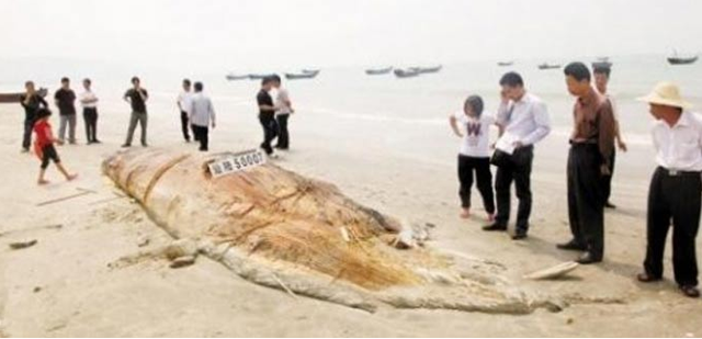 misteriosa criatura marina en costa de china