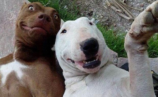 animalSelfies_620