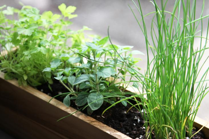 herbs on a windowsill