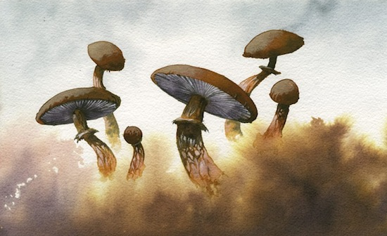 roper-mushrooms-fog