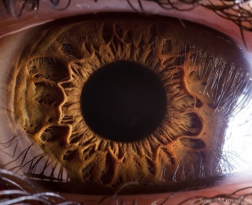 Human-Eyes-by-Photographer-Suren-Manvelyan-6-1