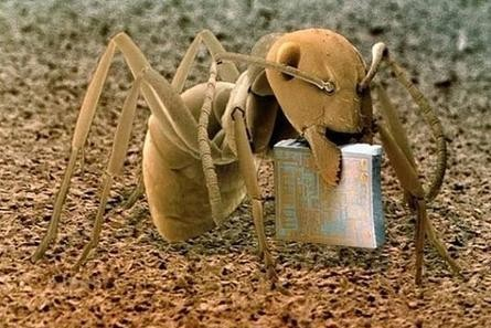 micro-ant-chip