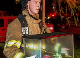 Firefighters Frog Rescue