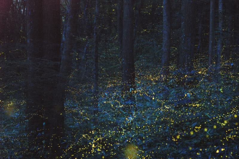 Magical-Forest-Japan-2