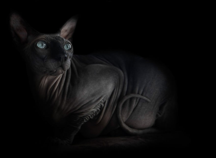 sphynx-cat-photos-by-alicia-rius-7__880