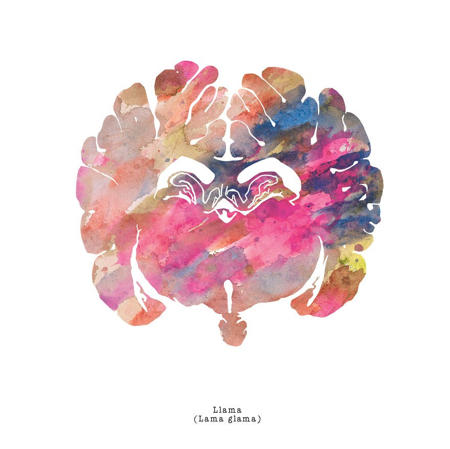 J_Sayuri_Animal_Brains_Watercolor_Illustration_Llama1__880